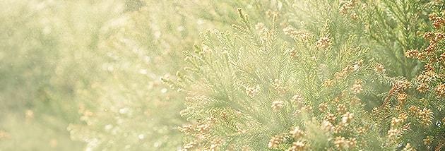花粉症 イメージ